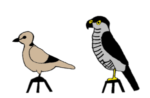 Collared dove control and sparrowhawk stimulus. Drawing: Ernő Vincze
